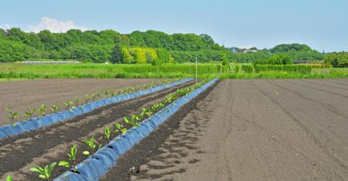 市街化区域でも農地法3条は「許可」